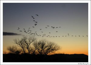 WheelingIt Sandhill Cranes At Sunset