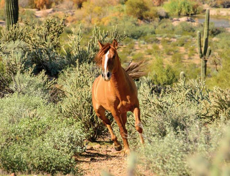 wild horse gallops near Bush