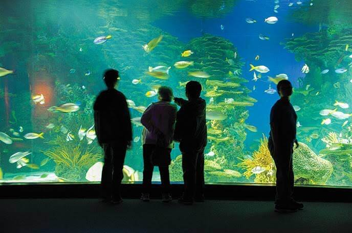 Ripley's Aquarium in Pigeon Forge